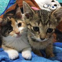 Pet Supplies Plus Fundraiser