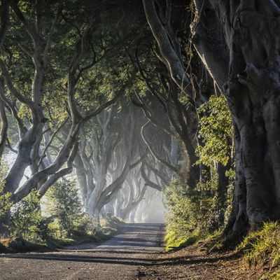 Game of Thrones Tour from Belfast including Giants Causeway May19-Jul19