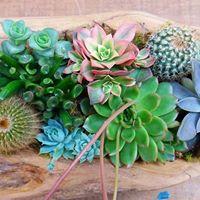 Workshop De Suculentas - Arranjos e Mini Jardins