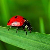 Class - Beneficial Bugs