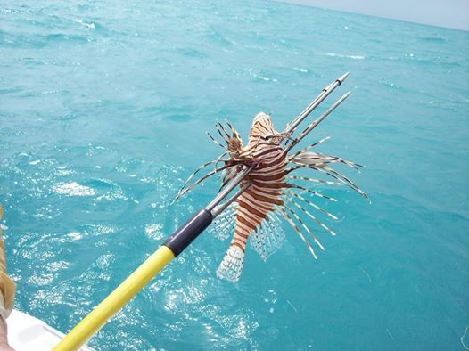 Dixie Divers Lionfish Derby - Catch 6 or More Free Trip.