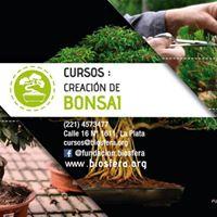 Creacin de Bonsai