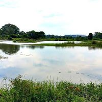 Registration Closed Walk Is Full-Birdwatching at Kranji Marshes