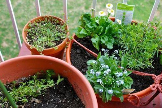 Kweken in potten [workshop]