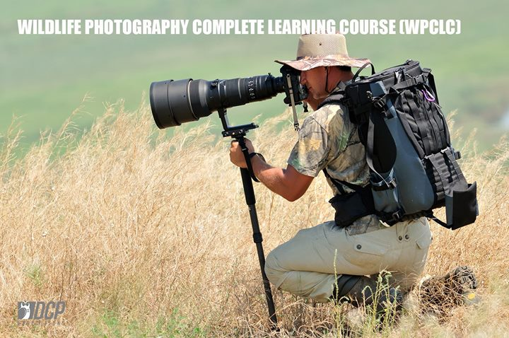 Wildlife Photography Complete Learning Course - February 2018