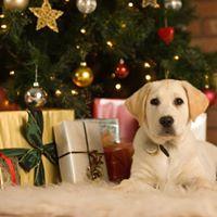 Christmas Jingle and Mingle