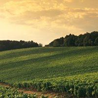 Antinori Wine Dinner August 17