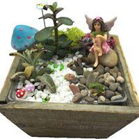 Succulent Fairy Misc. 2 Terrarium