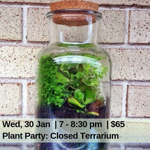 Plant Party Enclosed Terrarium 2 At Art Nest Creative Studio131