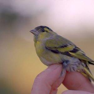 Bird by Margaret Salmon
