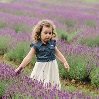 Limited Edition Lavender Field Minis