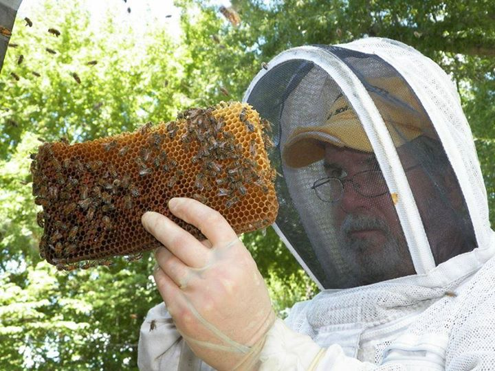 Bees our Pollinator by the Bartlett Bee Whisperer 1pm only