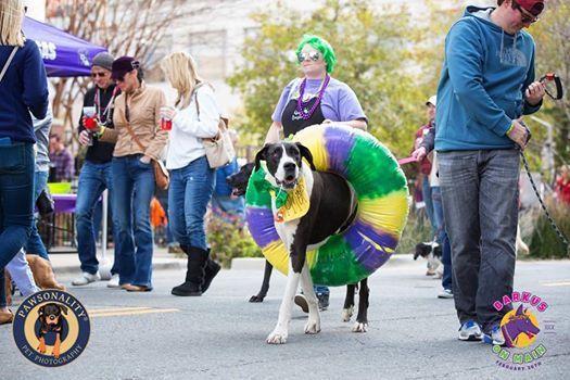 Dikki Du and The Zydeco Krewe LIVE at Barkus on Main