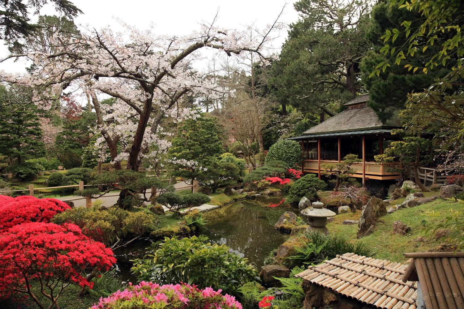 Womyn\'s Tea in the Japanese Tea Garden | San Francisco