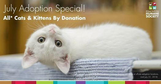 Cat & Kitten Adoption Special