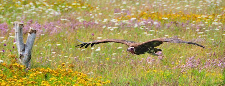 Birds Of Prey - Weyhill Andover
