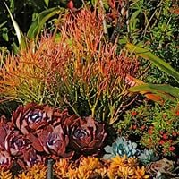 Free Seminar - Water-wise Landscaping with Succulents &amp Natives