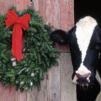 UFV Holstein Club Christmas Social and Charity Silent Auction