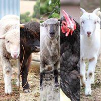 Happy Hooves Farm Sanctuary QUIZ NIGHT Fundraiser