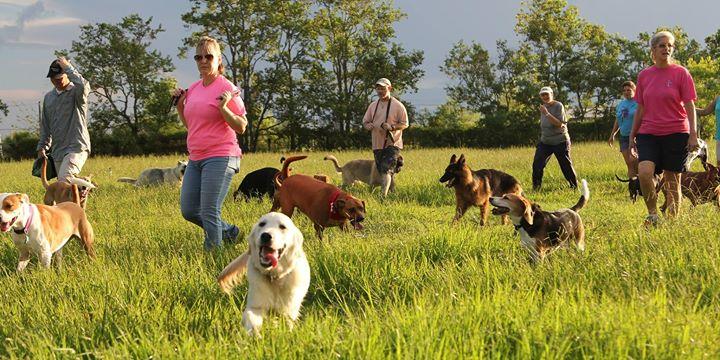 Large Field Dog Socialization Lifesaver Seminar with Jason Vasconi