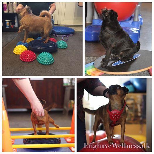 Leg & Kropskontrol sm hunderacer