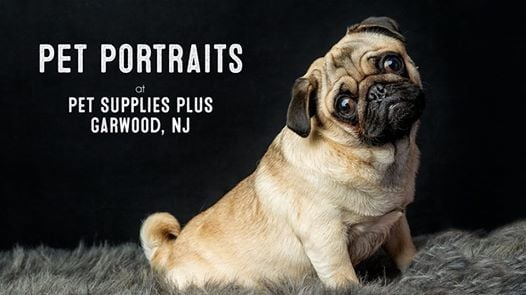 Pet Portraits & Pet Portraits at Pet Supplies Plus - Garwood NJ Jersey