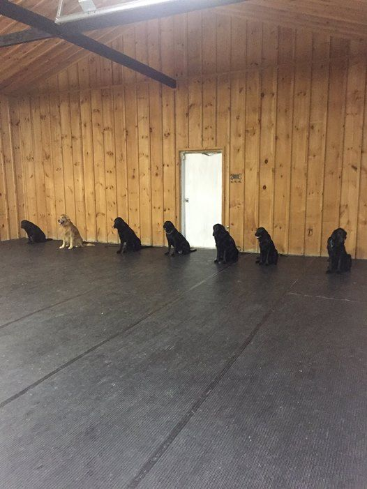 2 NGDC CKC Rally Obedience Trials - Approved