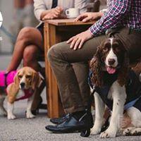 Sheep Dog Trials Festival
