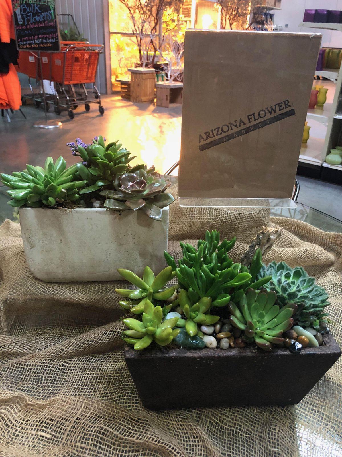 Succulent Dish Garden Design Class At Arizona Flower Market Phoenix