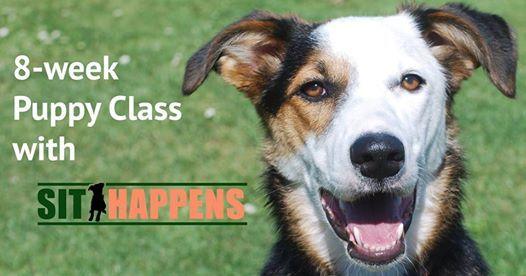 Puppy Fun & Focus Class