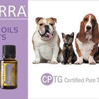 Safe Effective Use of Essential Oils for your pets