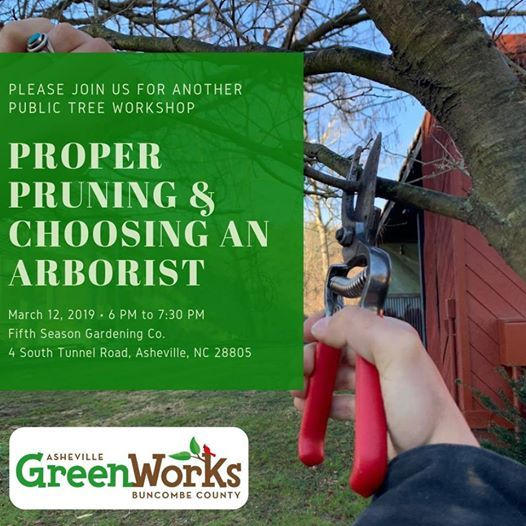 Proper Pruning and Choosing an Arborist