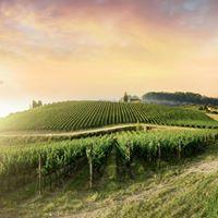 LLS Wine Seminar Abruzzo Molise &amp Basilicata