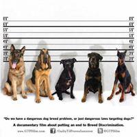 Lakewood Community Dog Safety Forum