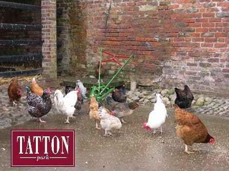 Home to Roost at Tatton Park