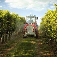 Weinpalaver Spanien