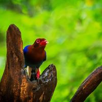Explore Majestic Sinharaja Rain Forest