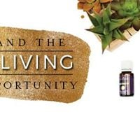 Understanding the Young Living Income Opportunity Class