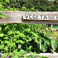 Vegetables If you wanna grow the best learn from the best
