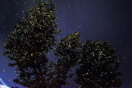 Fireflies Special Night Trek to Rajmachi Fort (Batch 4)