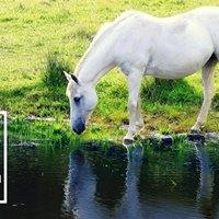 Pferd Bodensee - CXEVALO Messestand