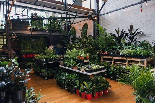 Melbourne - Indoor Plant Warehouse Sale - Jungle Sundays at