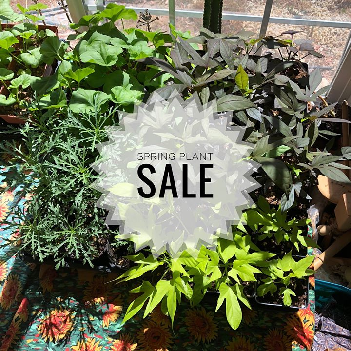 spring fair plant sale - Albuquerque Garden Center