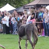 Bexley Donkey Derby