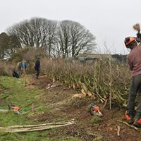 2018 Hedgelaying Competition