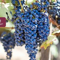 WSET Level 2 Wine - Distance Learning Course