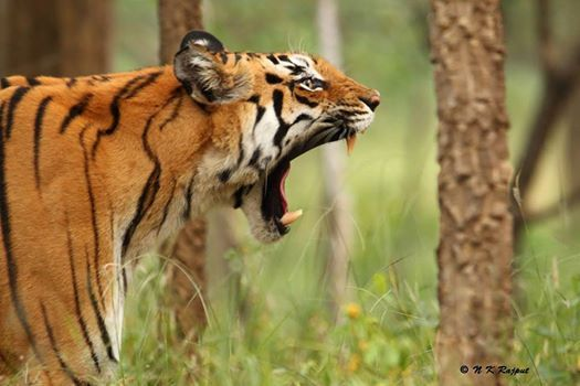 Pench Tiger Reserve (MP) - Expedition by Jungle Trail