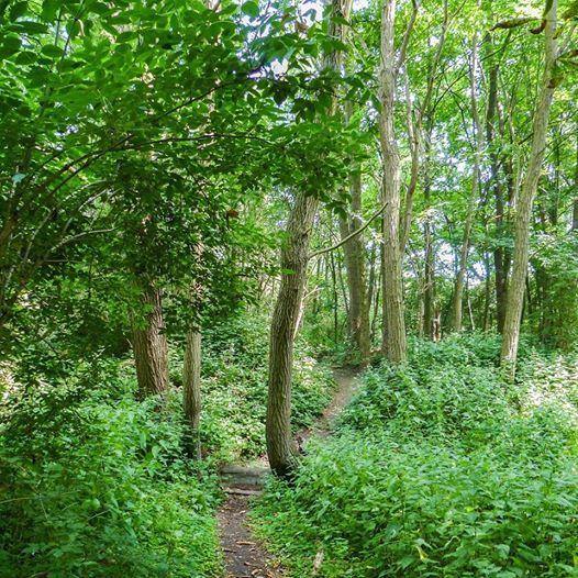Wandeling doorheen het Neuzenbergbos & Groen Burcht (5 km 5km)
