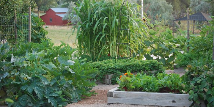 Herb Gardening for Utah at Conservation Garden Park, West Jordan