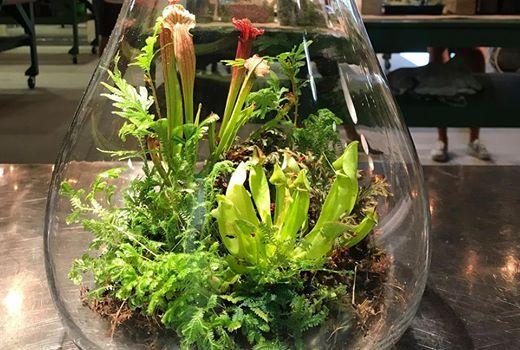 Carnivorous Plant Terrarium At Plantbar3102 Holly Road Virginia